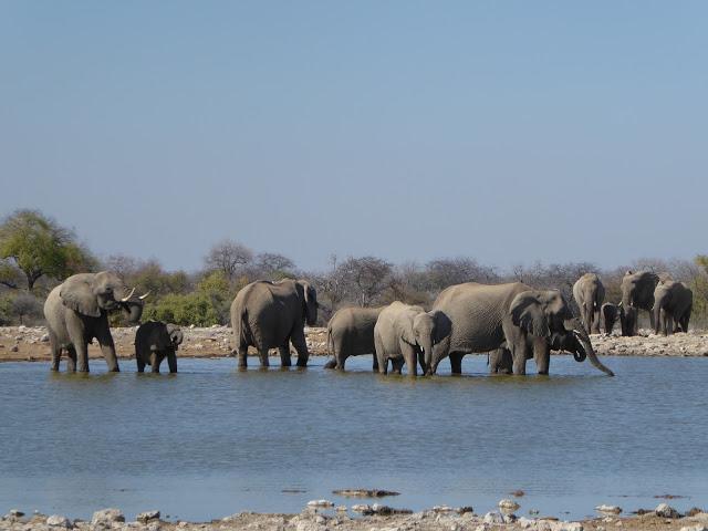 Elefanten am Baden