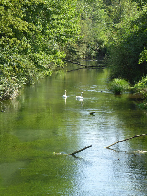 Schwäne auf grünem Fluss