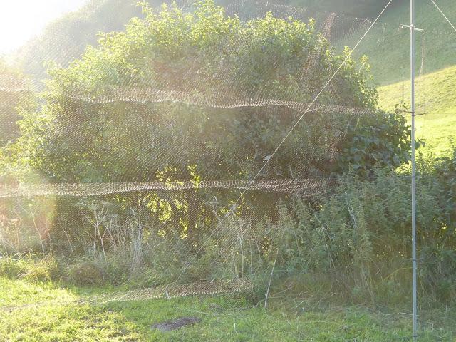 Vogelfangnetz