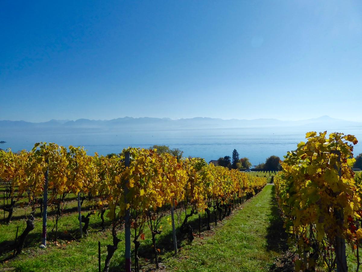 Lausanne - Genève. [Lac Léman]